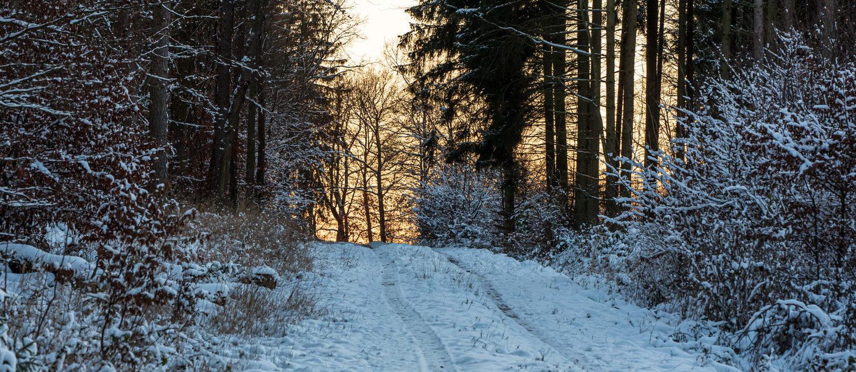 Winter um Altw_010921_VB_30