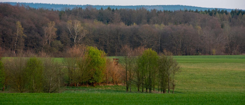Frühling_4