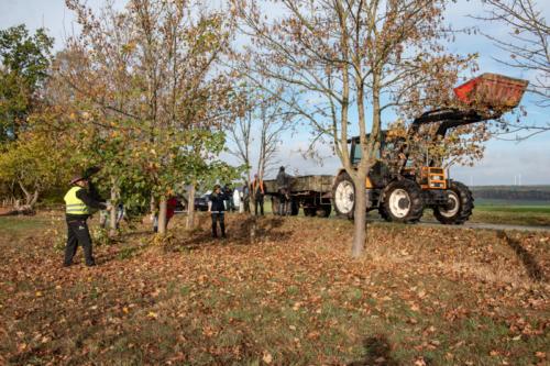 Baumpflege 181027 VB 05