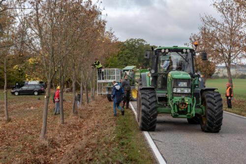 Baumpflege 181027 VB 11