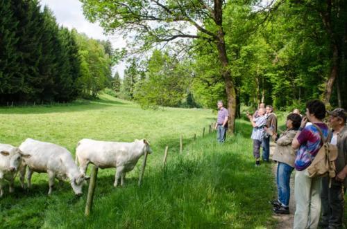 Vatertag-Waldbegehung 250517 VB 007